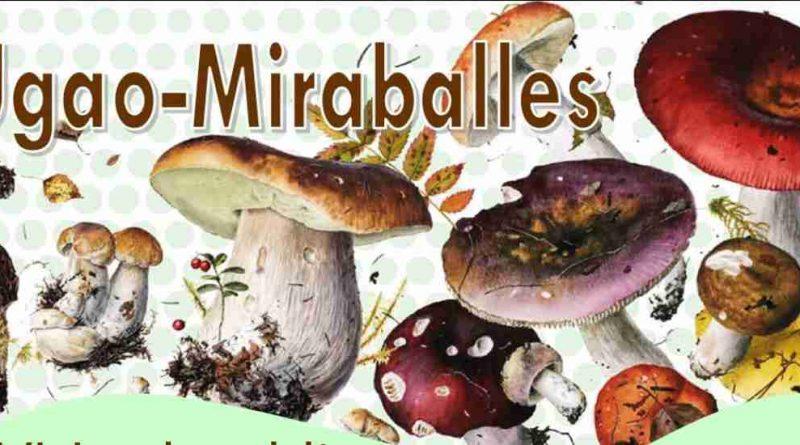 Las setas serán las protagonistas el 6 y 7 de noviembre en Ugao-Miraballes